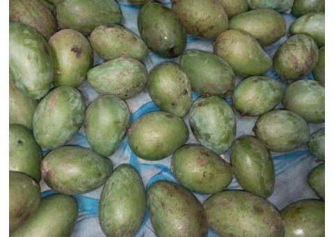 সুস্বাদু আম রুপালি  aam rupali - mango