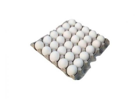 Layer eggs (White)